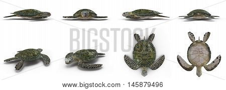 Green sea turtle angles isolated on a white background 3D Illustration