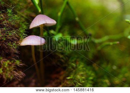 Closeup Fungus In Green Moss
