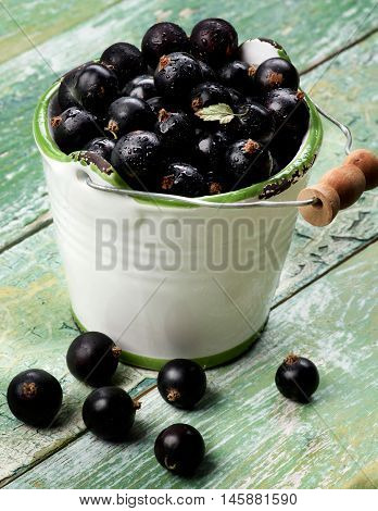 Fresh Ripe Berries of Blackcurrant with Small Leaf in White Garden Bucket closeup on Cracked Wooden background