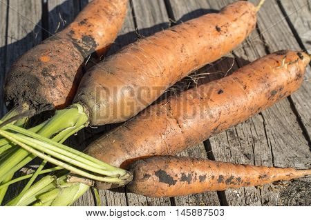 Carrots With A Tops Of Vegetable