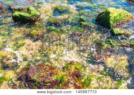 Rocks and green algae under water drawn by stream.