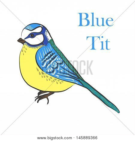 vector illustration ethnic bird blue tit. bird in graphic style.vintage illustration