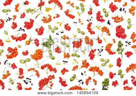 Autumn pattern from rowan acorns flowers and various fruits isolated on white background top view. Flat lay styling.