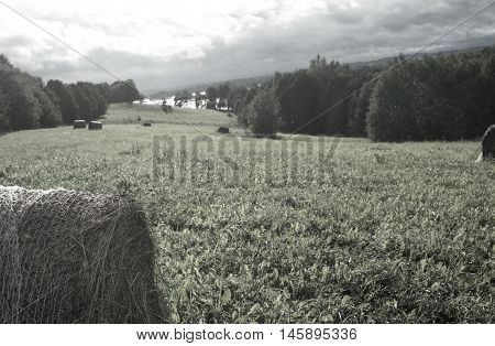 Haycocks stacked in the meadow filtered shot with overcast sky in the background