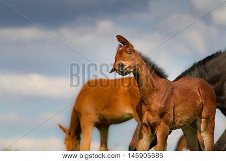 Funny colt portrait on spring pasture against sky