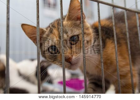 Red kitten in a cage arrives at the shelter. Pets