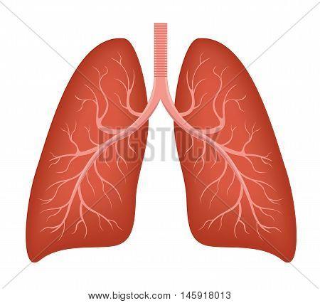 Human Lung anatomy diagram. Illness respiratory cancer graphics. Vector