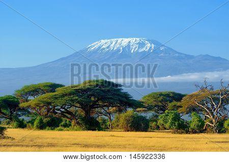 Kilimanjaro On African Savannah