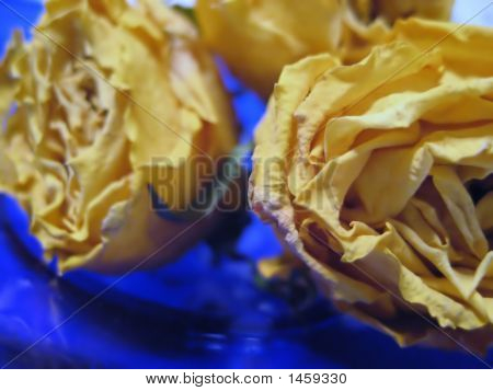Extreme Close Up Of Dried Yellow Roses
