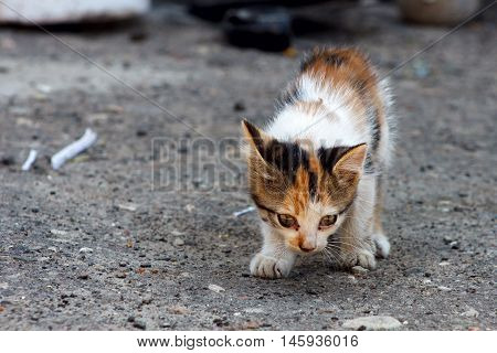 Little kitten looking for a home. Colour photo