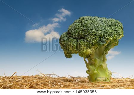 Tree of broccoli. Fantasy Landscape close up