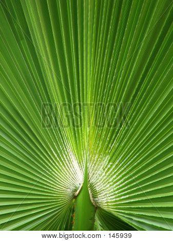 Flowers - Palm