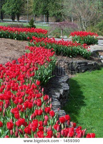 Red Tulips At Botanical Garden
