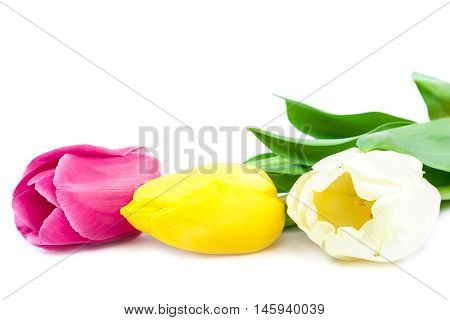 Bouquet of fresh tulips isolated on white background.