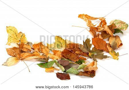 Autumn Dried Leafs Isolated On White