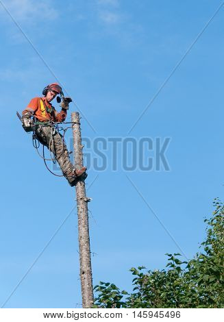 Quebec Canada - August 5 2016 : Professional lumberjack cutting tree on the top with a chainsaw in Quebec country Canada - serial pictures