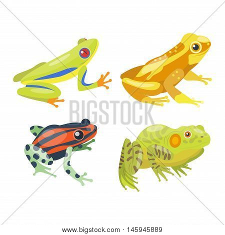 Funny frog cartoon collection vector illustration. Green, wood, red toxic frogs flat syle isolated on white background