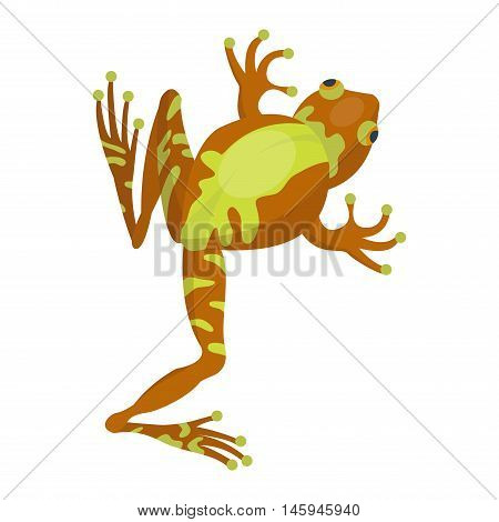 Funny frog cartoon vector illustration. Some frog flat syle isolated on white background