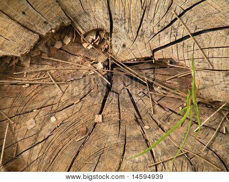 slice of pine