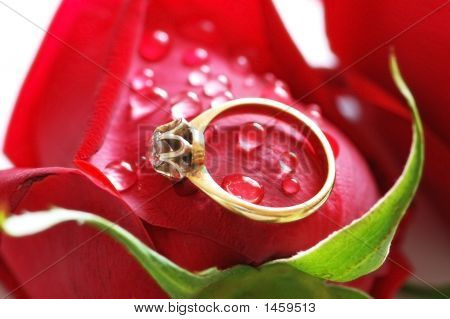 Wedding Ring With Brilliant On The Red Rose