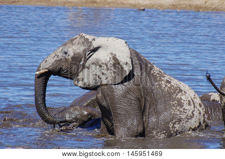 Wild Animals Of Africa: Group Of Elephants