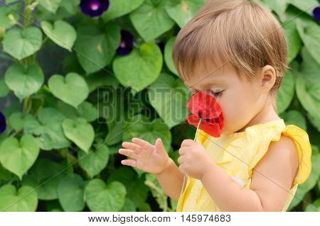 Little Girl In Yellow Dress Smelling Red Poppy Flower