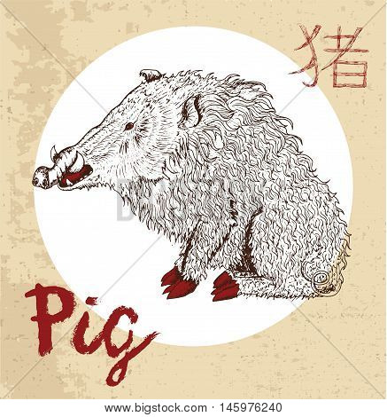Chinese zodiac symbol of hand drawn Pig or Boar with lettering. Horoscope and astrological vector sign of asian new year calendar. Graphic drawing with engraved animal. Chinese hieroglyph means Pig