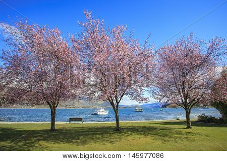 pink flowers blooming in beautiful scenic in lake wanaka south island new zealand important traveling destination