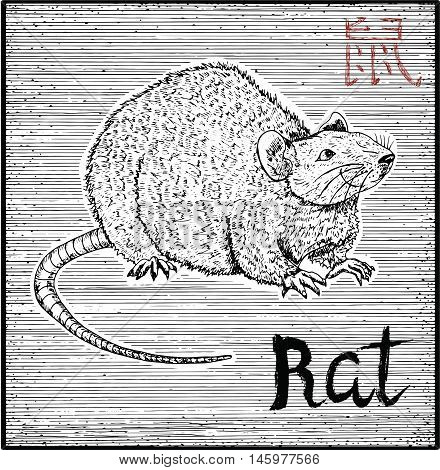 Engraved illustration of zodiac symbol with Rat or Mouse and lettering. Horoscope and astrological vector sign of asian new year calendar. Graphic line art with animal. Chinese hieroglyph means Rat