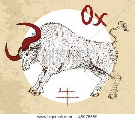Chinese zodiac symbol of hand drawn Ox or Bull with lettering. Horoscope and astrological vector sign of asian new year calendar. Graphic drawing with engraved animal. Chinese hieroglyph means Ox