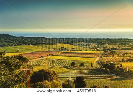 Bolgheri and Castagneto vineyard aerial view on sunset. Maremma Tuscany Italy Europe.