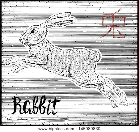 Engraved illustration of zodiac symbol with rabbit and lettering. Horoscope and astrological vector sign of asian new year calendar. Graphic line art with animal. Chinese hieroglyph means Rabbit