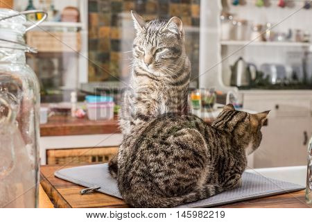 Two Cats By The Kitchen