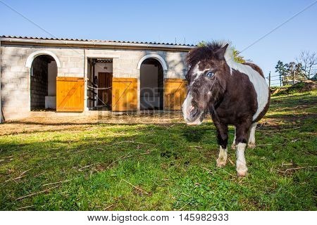 Pony In Front Of Stables