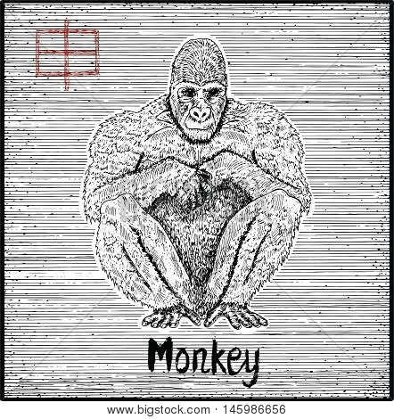 Engraved illustration of zodiac symbol with monkey and lettering. Horoscope and astrological vector sign of asian new year calendar. Graphic line art with animal. Chinese hieroglyph means Monkey