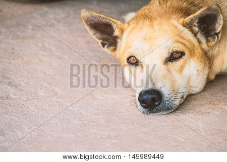 Dog sleeping look something in relax time