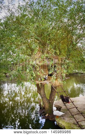 Chiken Duck and Other Bird Little House at Tree Over Pond
