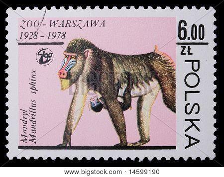 Polónia - por volta de 1978: Um selo - Hamadríade