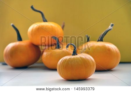 Yellow small pumpkin on a yellow background. Close up.