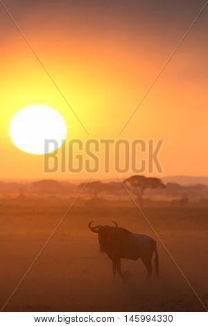 Sunset in Amboseli Kenya. Silhouettes of gnu walking in front of the sun. Vertical shot