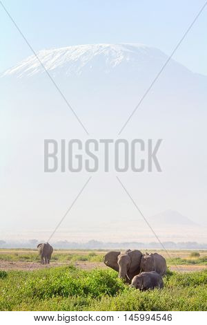 Elephants in front of Kilimanjaro at the background shot at Amboseli national park Kenya. Vertical shot