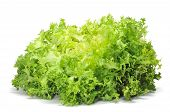 image of escarole  - an escarole endive on a white background - JPG