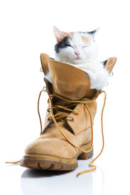 picture of funny animals  - Adorable little kitten sleeping inside a boot isolated on white background - JPG