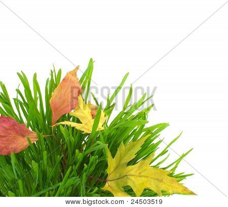 Green Grass And Fall Leaves, Isolated On White