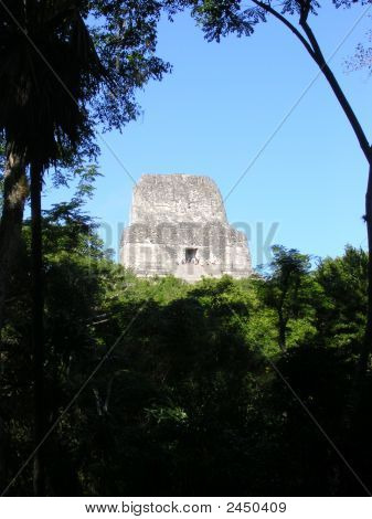 Maya Temple In Tikal, Hidden In The Forest