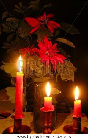 Noche Buena Plant 2