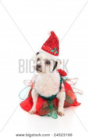 Cute Christmas Pet Dog