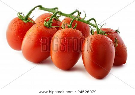 Piccadilly Tomatoes Close-up