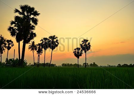 The fields at sunset