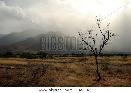 Storm Season In Madera Canyon